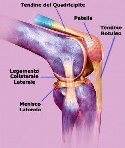 Infiammazione tendine rotuleo