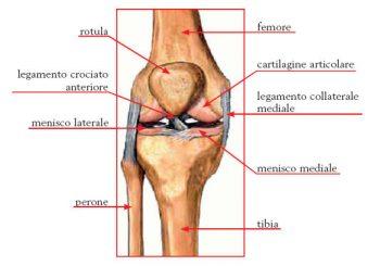 Sindrome-femoro-rotulea-esercizi