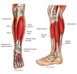 Dolore al Muscolo della Gamba Sinistra: Cause, Sintomi e Rimedi