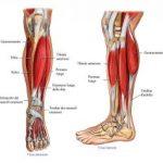 Dolore al Muscolo della Gamba sinistra