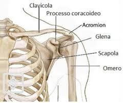 dolore spalla sinistra