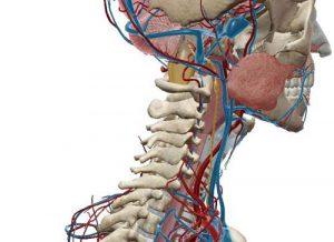 sintomi infiammazione nervo vago