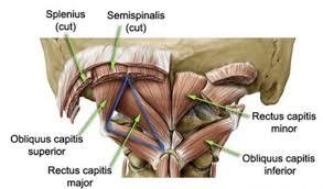 le vertigni causate dai muscoli sottoccipitali