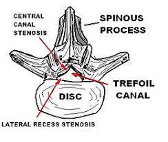 anatomia canale vertebrale cervicale