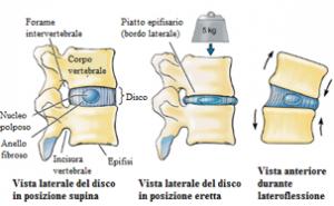anatomia vertebrale